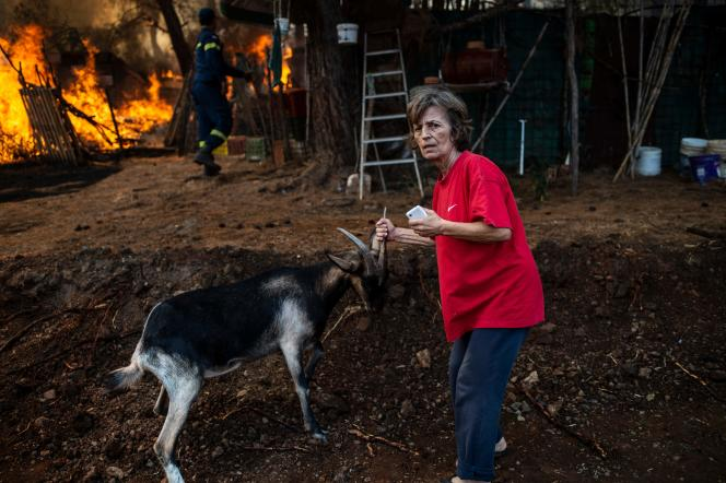 Une habitante du village de Makrimalli tente de sauver sa chèvre, sur l'île d'Eubée en Grèce, le 14 août.