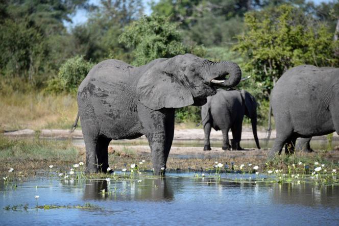 Dans le parc national de Bwabwata, en Namibie, en avril 2017.