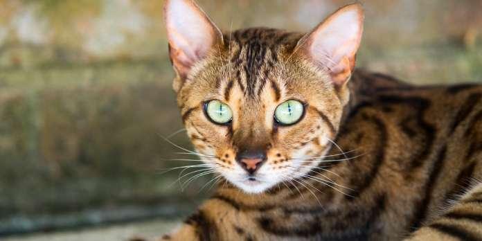 Un vaccin contre l'allergie aux chats et autres infos scientifiques