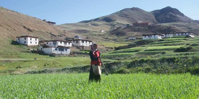 Dans l'Himalaya : « On dirait que quelque chose est déréglé »