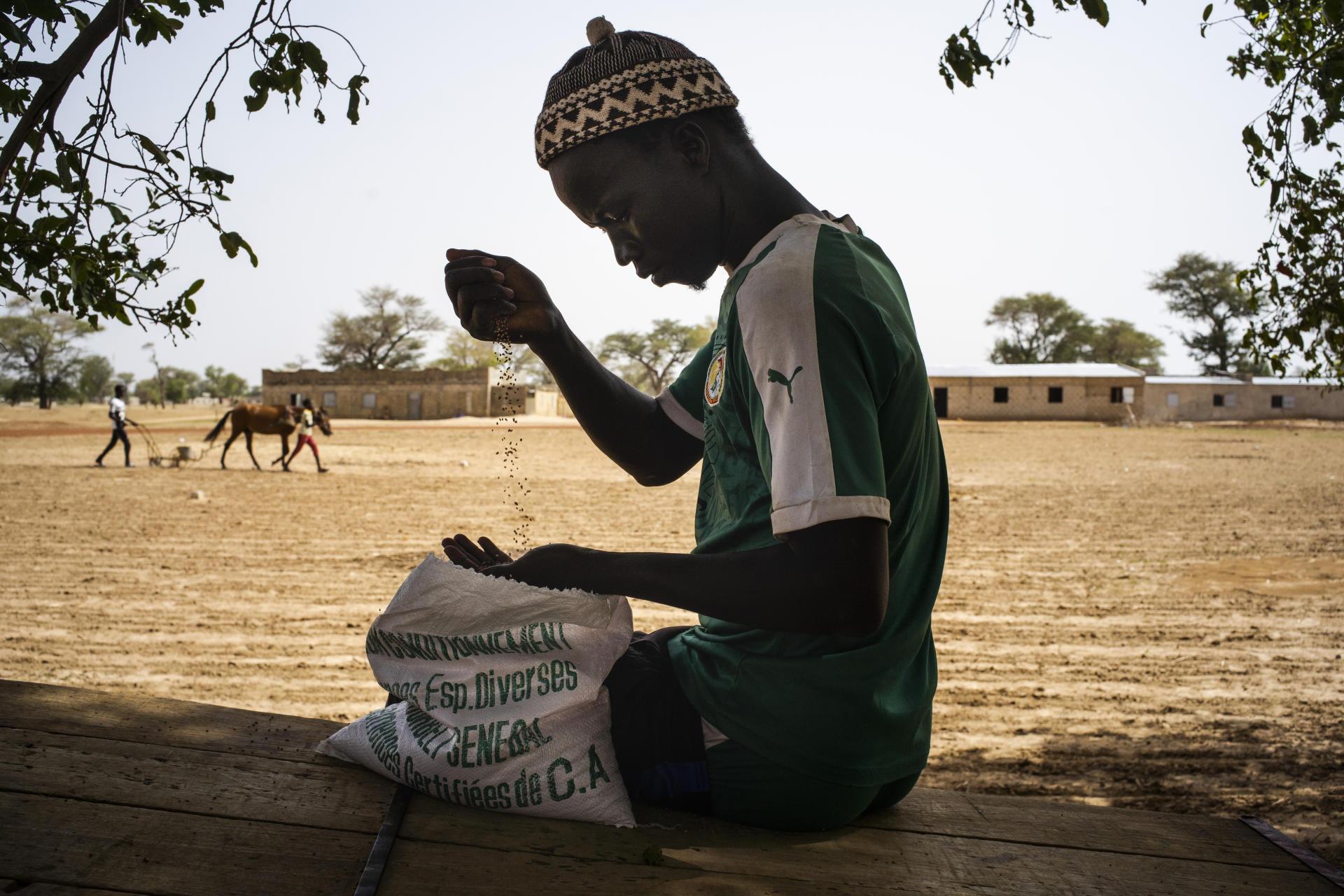 A Niakhar (Sénégal), le 4 juillet, Mamadou Diouf et sa famille sèment le mil après les premières pluies. Ils ont multiplié par trois leurs rendements grâce à la mise en place de pratiques agroécologiques.