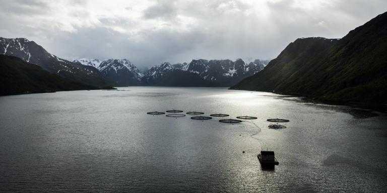 NYVOLL, NORVEGE. JUIN 2019.La ferme d'élevage de saumons de Grieg Seafood. Les saumons sont élevés dans les filets disposés dans le fjord.