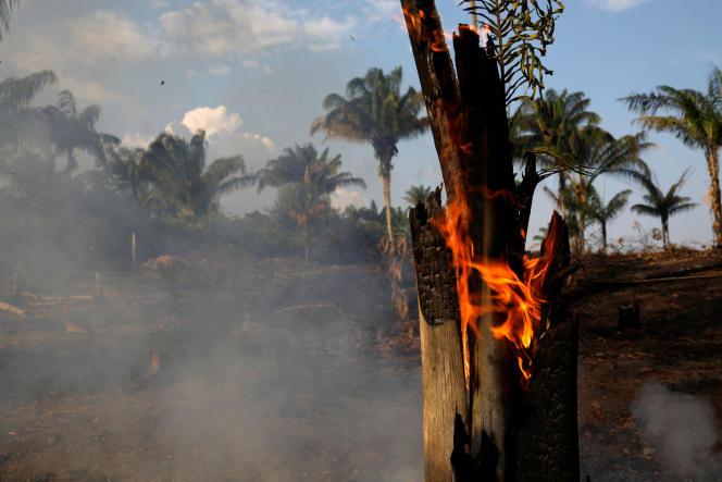 Un feu en Amazonie, le 20 août 2019.
