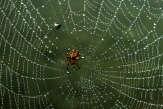 Christine Rollard: «La peur des araignées n'est pas ancestrale mais culturelle »