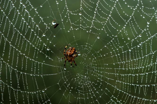 Une araignée tisse sa toile àTancarville (Seine-Maritime), le22 août 2019.