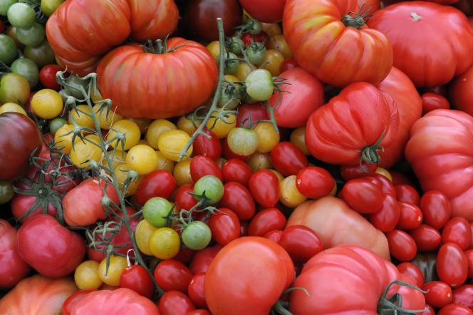 Exploitation de tomates à Guipavas, dans l'ouest de la France, en 2016.