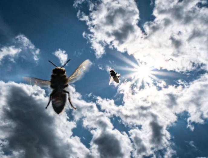 Des abeilles dans le ciel de Francfort (Allemagne), le 13 août.