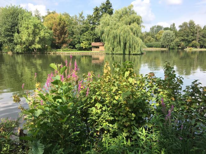 Paysage d'étang et de verdure des hortillonnages.