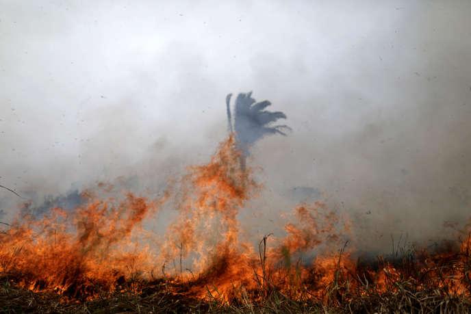 Feux en Amazonie : la ministre des outre-mer réclame la création d'un fonds international