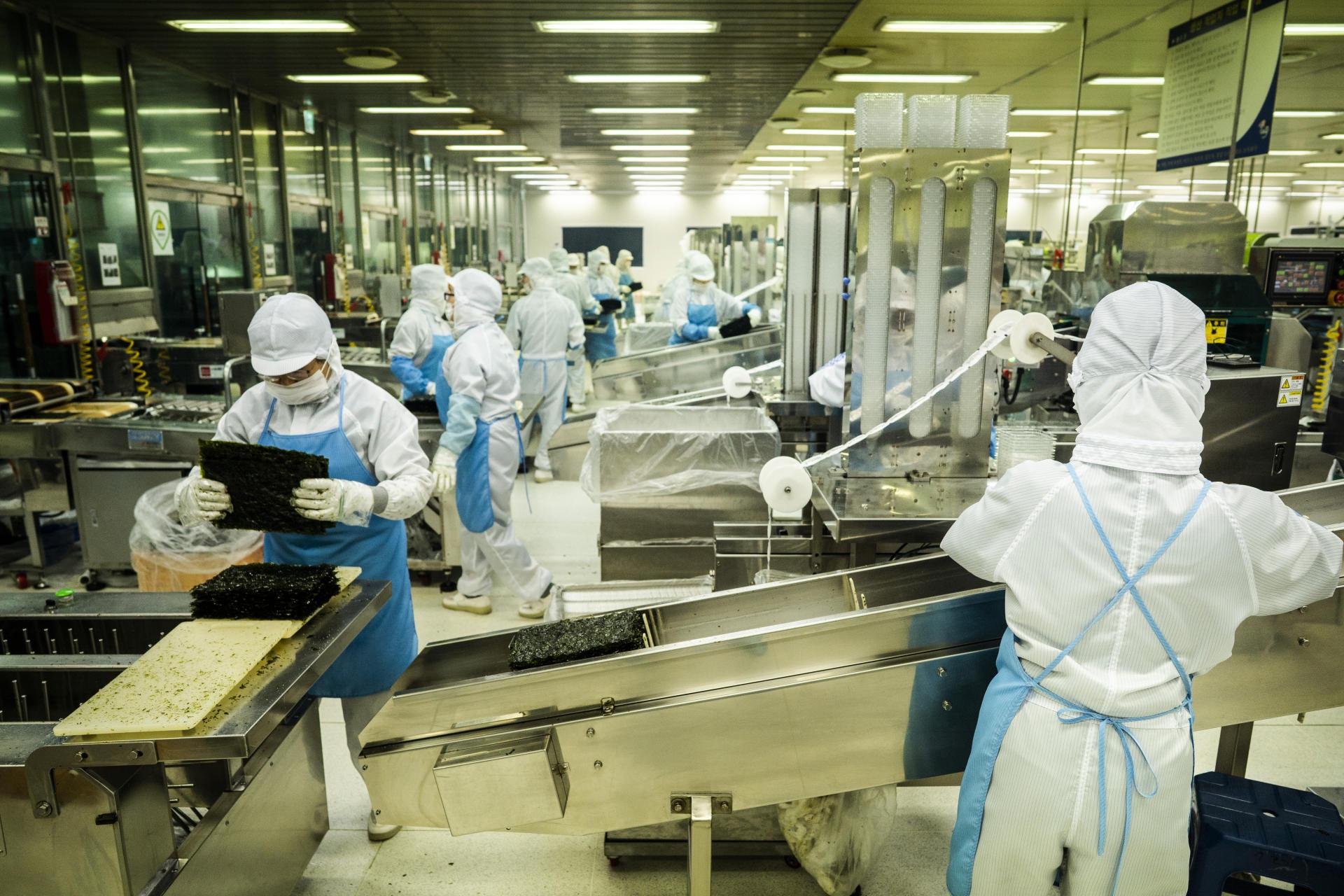 Le 18 juillet, à Shinan (Corée du Sud). Dans l'usine de transformation de la société Shinan 1004 Seaweed, dans la partie méridionale du pays, le gim, une algue rouge, est grillé pour être transformé en snacks et en chips.