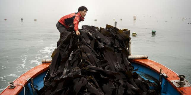 Planète : Toute l'actualité sur Le Monde.fr.La Corée du Sud veut convertir la planète aux algues