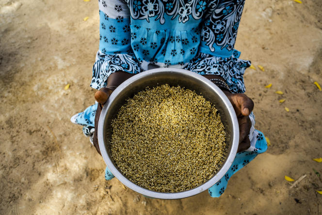 A Mbane (Sénégal), le 3 juillet. Les graines de mil doivent être pillées, puis tamisées pour les séparer du son, lavées dans l'eau, pilées de nouveau afin d'être réduites en poudre, tamisées et pilées pour la troisième fois.