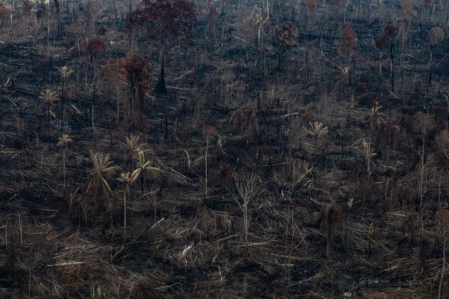 Dans cette photo diffusée par Greenpeace, on voit une zone de l'Amazonie après un incendie à Novo Progresso dans l'Etat de Para au Brésil, le 23 août.