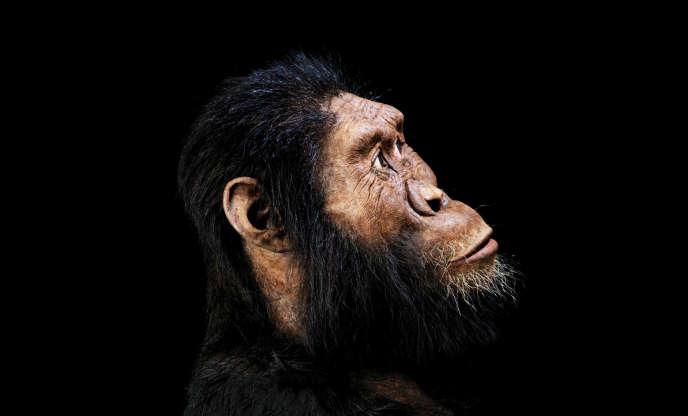 Reconstitution du visage d'«Australopithecus anamensis», réalisée par John Gurche à partir du spécimen de crâne MRD.