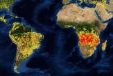 Les incendies en Afrique et en Amazonie sont-ils comparables?