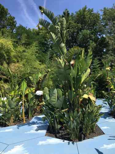 Les créatrices de ce jardin merveilleux où l'on marche sur le ciel et où les enfants et les adultes sont immédiatement à leur aise ont rassemblé bananiers («Musa paradisiaca») etstrelitzias, ces«oiseaux du paradis» qui lui ont donné leur nom.