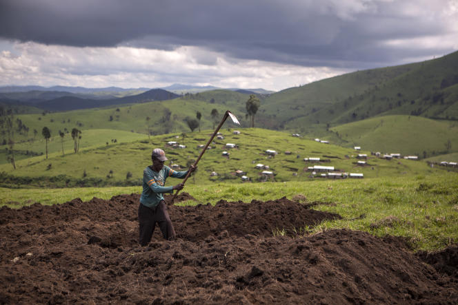 Travaux des champs à Masisi, dans le Nord-Kivu, dans le nord-est de la RDC, en 2015.