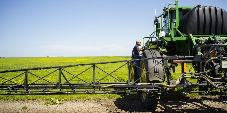 ZYLANDIA, CANADA. JUILLET 2019. Kely Mc Farell, producteur de lentilles, détient 1700 hectares. Il épand à l'aide de son tracteur un déshydratant pour tuer les mauvaises herbes.  En quelques années l'état du Saskatchewan est devenu le premier producteur au monde de lentilles.
