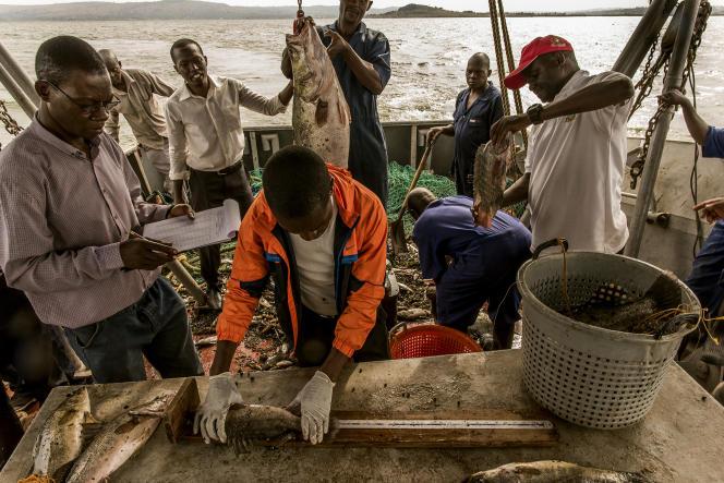 Près de la ville de Jinja, en Ouganda. Régulièrement, des missions de collecte de données sont menées par l'institut ougandais Nafirri (National Fisheries Resources Research Institute) afin de contrôler l'état halieutique du lac Victoria.