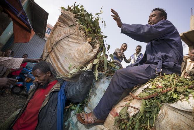 Déchargement de khat, à Aweday, dans l'est de l'Ethiopie.