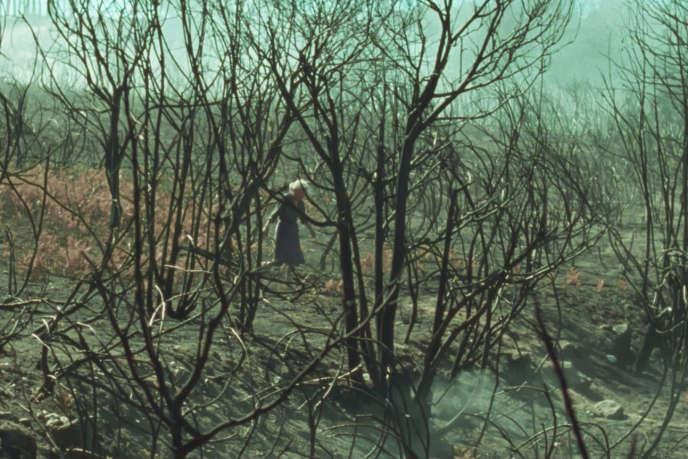 « Viendra le feu», film français, espagnol et luxembourgeois d'Oliver Laxe.