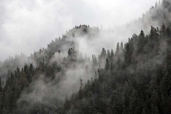 Une forêt de Colombie-Britannique (Canada)..