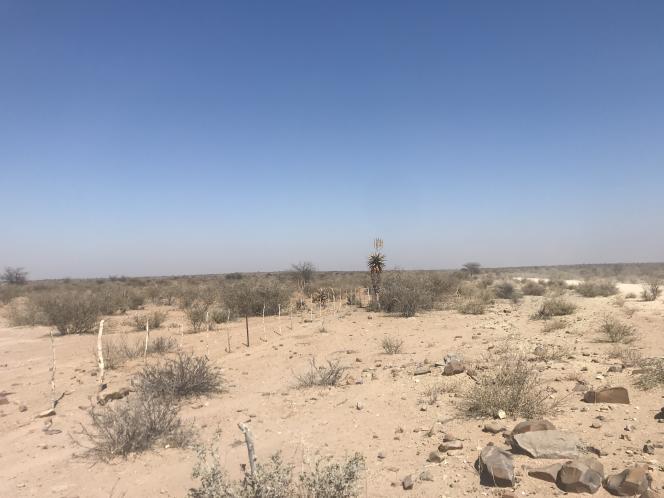 Le bush du nord du Kalahari, dans l'est de la Namibie, en août 2019.