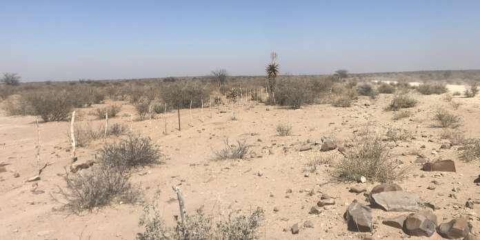 Dans l'est de la Namibie, une sécheresse historique affame hommes et bêtes
