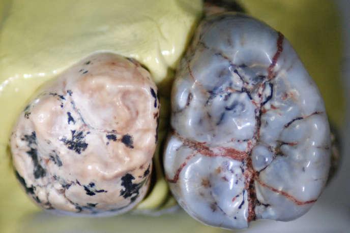 Dents appartenants à unHomoancien (à gauche) et à un«Paranthropus robustus»(à droite).