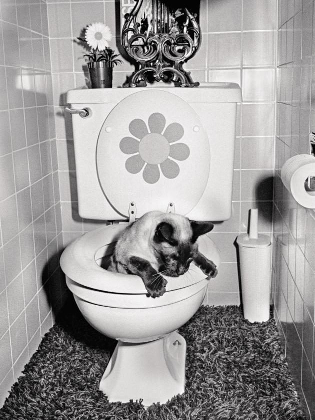 Le chat Chop Chop utilisant les toilettes, 1973 (série «The Jangs»).