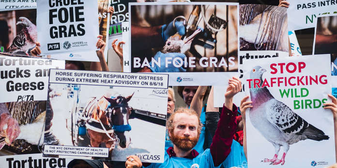 Le foie gras bientôt interdit à New York ?