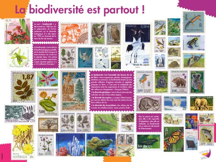 « La biodiversité est partout», chapitre« Qu'est-de que la biodiversité?»