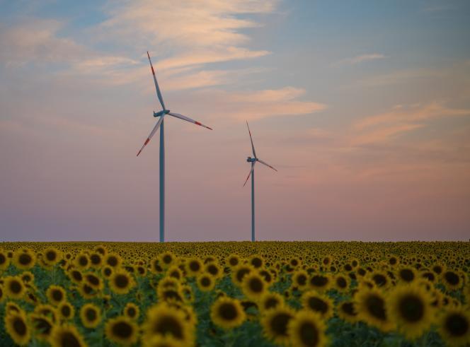 Des éoliennes à Sieversdorf, dans l'est de l'Allemagne, en juillet 2018.
