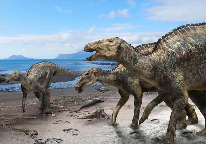 «Kamuysaurus japonicus» a probablement vécu dans des zones côtières, un habitat rare pour les dinosaures.