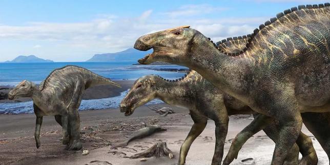 «Kamuysaurus japonicus», une nouvelle espèce de dinosaure découverte au Japon