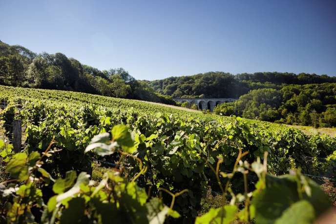 L'ancien domaine de Désiré Rolet couvre 65hectares, l'un des plus étendus du Jura.