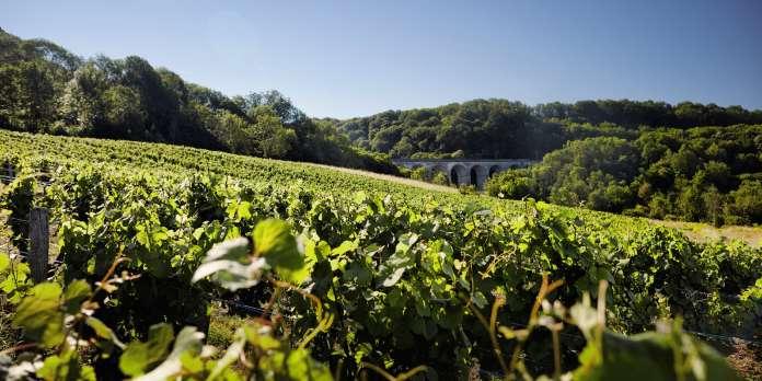 Offensive bourguignonne sur les vignobles du Jura