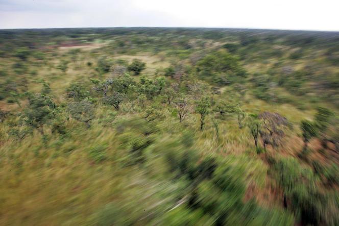 Forêts dans le nord de l'Ouganda.