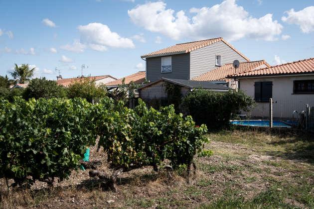 Parempuyre (Gironde), le 10 septembre. Certaines habitations se trouvent à moins de 10 mètres des vignes.