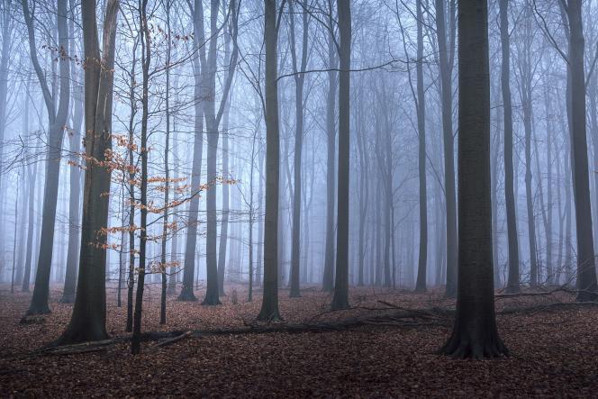 Une forêt à Naestved au Danemark.