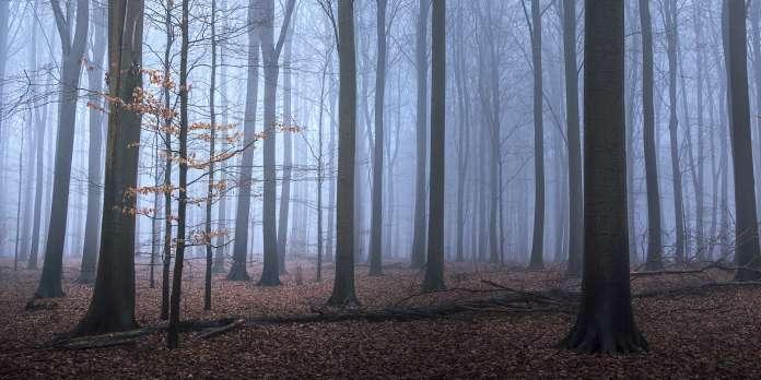 Danemark : 2,4 millions d'euros récoltés lors d'un téléthon en faveur du climat