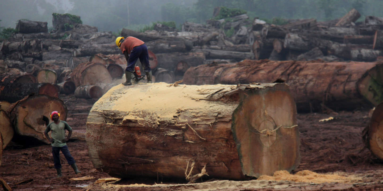 En Centrafrique, le secteur forestier relève doucement la tête
