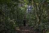 Protection des forêts: Total prié d'accorder ses actes avec ses paroles en Afrique