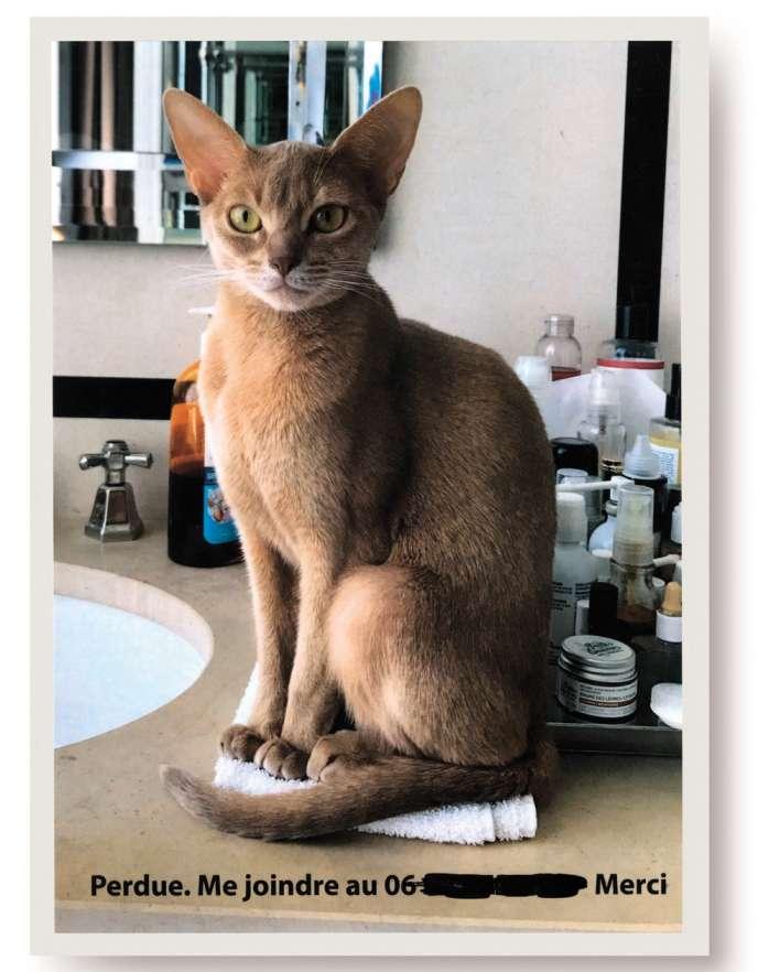 L'avis de recherche de Dune, le chat de l'auteure Virginie Mouzat.
