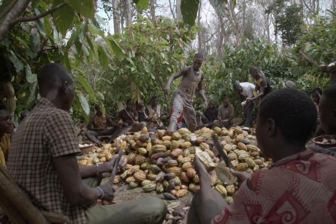 De nombreux enfants travaillent dans les plantations ivoiriennes de cacao.