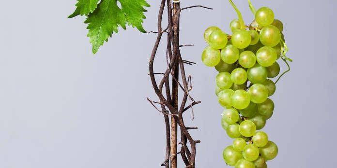 Vin : l'Apocalypse, ça donne soif