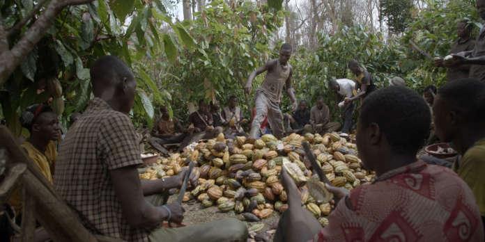 Télévision : « La Face cachée du cacao », un business « cannibale » et criminel