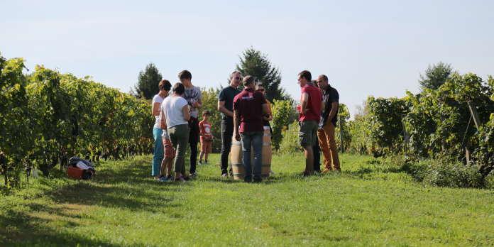Cinq routes des vins à sillonner sans modération