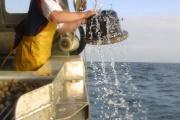 Un pêcheur de Saint-Malo (Ille-et-Vilaine) retire un casier à bulots, en 2002.