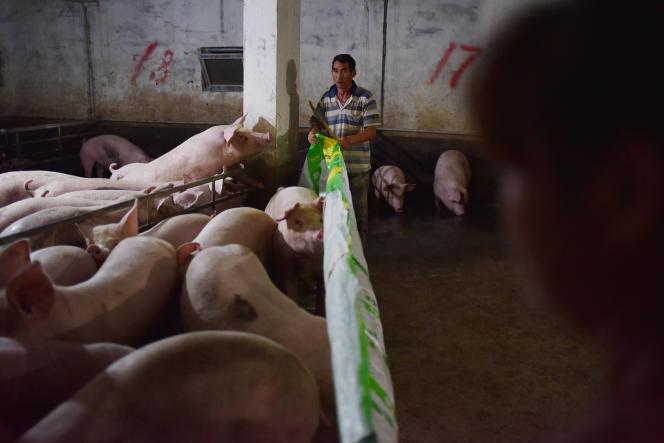Un élevage porcin dans le comté de Yiyang (Hunan), en Chine, en 2018.